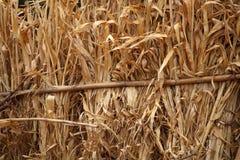 Corn Straw Stock Photos