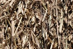 Corn straw. Dry corn straw photographed in bales Royalty Free Stock Image
