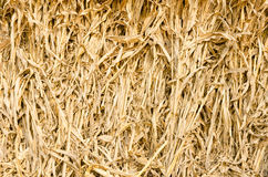 Corn straw Royalty Free Stock Photography