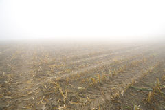 Corn Stubble Stock Photography