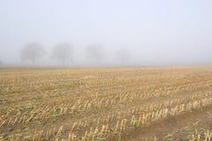 Corn Stubble Royalty Free Stock Image