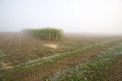Corn stubble field on a misty morning Royalty Free Stock Photography