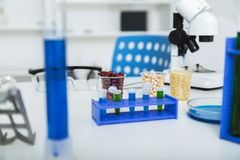 Corn subject to selection in Microbiological laboratory Stock Photography