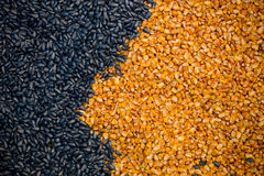Corn and sunflower seeds Stock Images