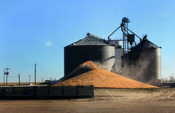 Corn Surplus Royalty Free Stock Photos