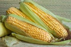 Corn Royalty Free Stock Image