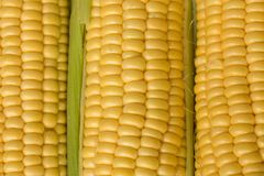 Corn or sweetcorn on the cob closeup Stock Photos