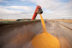 Corn tank Stock Photos