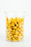 Corn with Test Tubes Stock Photo