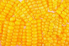 Corn texture Royalty Free Stock Photos