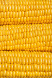 Corn texture Royalty Free Stock Photo