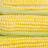 Corn texture Royalty Free Stock Photography