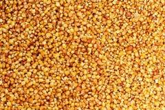 Corn texture Stock Photo