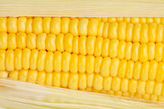 Corn texture Stock Photos