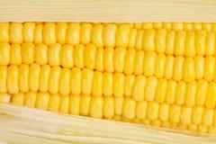 Corn texture Stock Photos