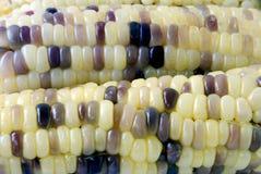 Corn texture. The corn texture close up Royalty Free Stock Photo