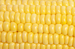 Corn texture closeup Royalty Free Stock Images