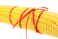 Corn tied with ribbon isolated on white Stock Photography