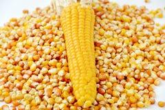 Corn and tinned corn mais Stock Image