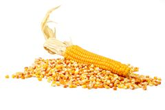 Corn and tinned corn mais Royalty Free Stock Photo