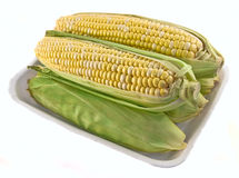 Corn in the Tray. Five corn cobs in the plastic tray royalty free stock photos