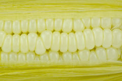 Corn two Royalty Free Stock Image