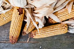 Corn V1 Royalty Free Stock Photos
