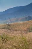 Corn valley Stock Photo