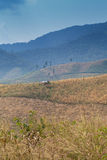 Corn valley Royalty Free Stock Photo
