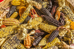 Corn variety Cuzco Peru. Variety of corns at Cuzco Peru royalty free stock photo
