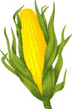 Corn. Vector Royalty Free Stock Photo