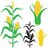Corn. Vector illustration (EPS 10 Stock Photography