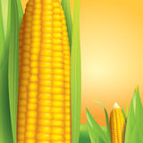 Corn vector illustration on yellow background. Royalty Free Stock Images