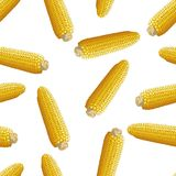 Corn vector seamless pattern Royalty Free Stock Photography