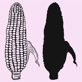 Corn vector  silhouette isolated Royalty Free Stock Photography