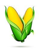 Corn vegetable royalty free illustration