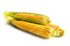Corn vegetable Stock Photography