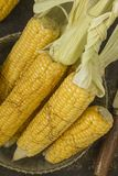 Corn. View of the ripped and ripe cob of corn Royalty Free Stock Image