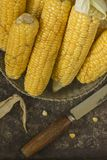 Corn. View of the ripped and ripe cob of corn Stock Images
