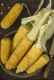 Corn. View of the ripped and ripe cob of corn Royalty Free Stock Images