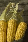 Corn. View of the ripped and ripe cob of corn Stock Photos