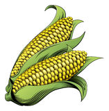 Corn vintage woodcut illustration Royalty Free Stock Photo