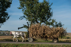 Corn wagon during harvest. In Bukovina, (Bucovina), Moldavia (Moldova Royalty Free Stock Images