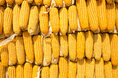 Corn Wall Stock Image