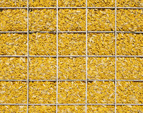 Corn, wall, yellow, natural, memory Royalty Free Stock Photos