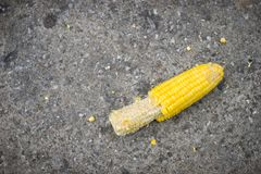 The corn was eaten and fell to the ground. Stock Photos