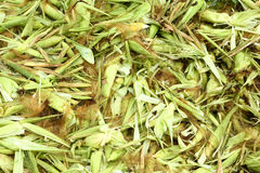 Corn waste Royalty Free Stock Images