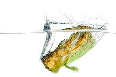 Corn in water Royalty Free Stock Photo