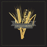 Corn and wheat with a gray label template Royalty Free Stock Images
