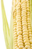 Corn on white Stock Images